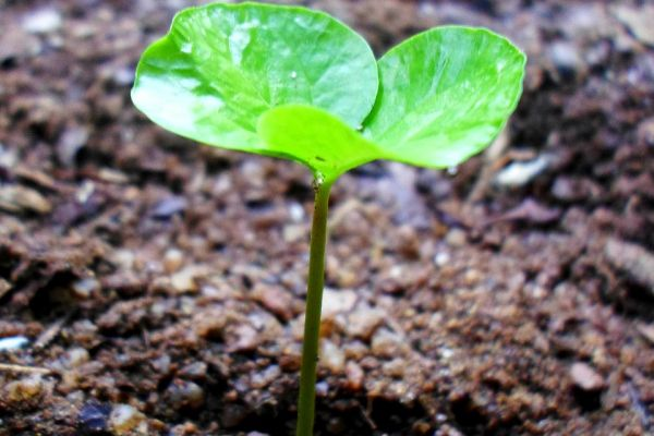 green-sprout-new-life-plant