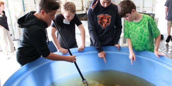 Students from McIntosh Middle School attend an EdExploreSRQ Career Exploration on aquaculture and sustainability
