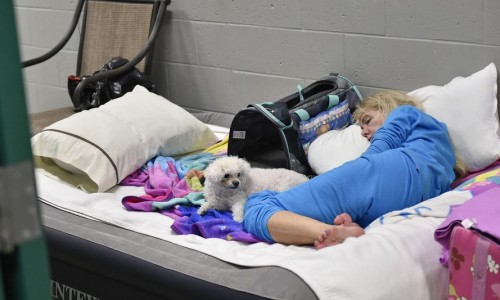 Photo: Picture of local resident and her dog sleeping at a hurricane shelter during Hurricane Irma in 2017