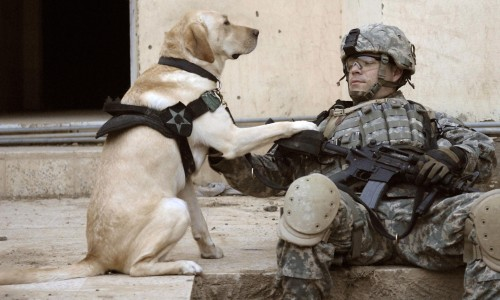 K9 Veterans Day honors military working dogs