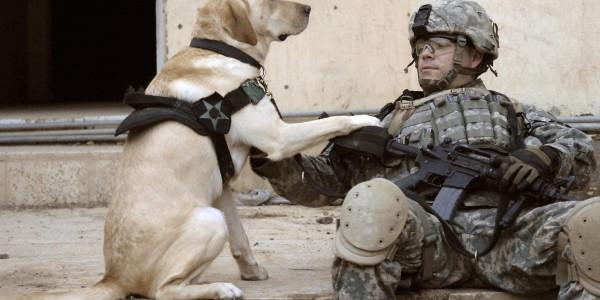 Military K9 hero 'living the life she deserves' | HLNtv.com